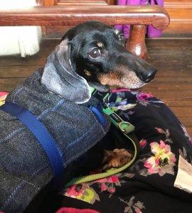 Sara's hound Hector